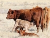 harding-land-and-cattle_024