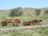 harding-land-and-cattle_092