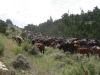 harding-land-and-cattle_113
