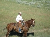 harding-land-and-cattle_117