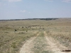 harding-land-and-cattle_125
