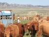 harding-land-and-cattle_127