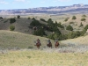 harding-land-and-cattle_144