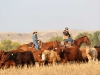 harding-land-and-cattle_181