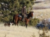 harding-land-and-cattle_001