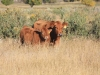 harding-land-and-cattle_069