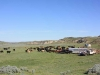 harding-land-and-cattle_090