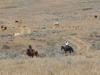 harding-land-and-cattle_169
