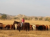 harding-land-and-cattle_182